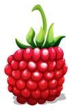 Rasberry frais de tige verte Images libres de droits