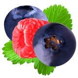 Rasberry isolado e mirtilo no branco Foto de Stock Royalty Free