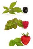 rasberry jordgubbe för björnbär royaltyfria bilder