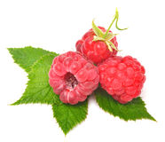 Rasberry with leaves. Isolated on white Stock Photo