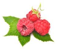 Rasberry met bladeren Stock Foto