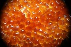 Rasberry-Schlammform oder Form, Tubifera-ferrunginosa Stockfoto
