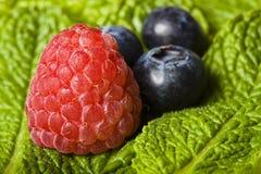 Rasberry und Blaubeeren auf frischer fregrant Minze lizenzfreies stockbild
