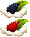 Rasberry und Brombeere auf Creme stock abbildung