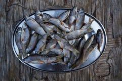 Rasbora fish Stock Photo