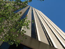 Rascacielos con el árbol Imagenes de archivo