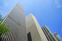 Rascacielos con un árbol Fotografía de archivo libre de regalías