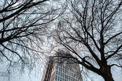 Rascacielos viejo en el fondo de dos árboles Imagen de archivo