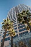 Rascacielos y palmeras fotos de archivo libres de regalías