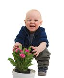 Rascal and flowers. The little boy plays with flowers isolated on a white background stock photo