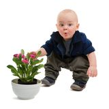 Rascal and flowers Royalty Free Stock Image