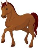 Rasecht paard Stock Afbeelding