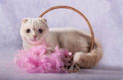 Rasechte witte kat die in een rieten mand liggen stock fotografie