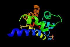 RASEF, som ingriper i biologiska processar liksom protein Arkivfoton