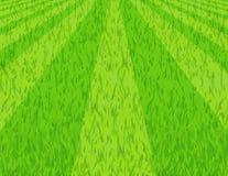 Rasen stockbild