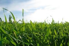 Rasen Stockfotografie