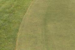 Rasen auf einem Grün Stockfotos