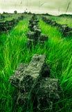 Rasen auf einem Sumpf in Irland Stockbilder