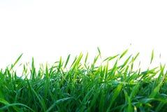 Rasen auf Weiß Lizenzfreie Stockfotos