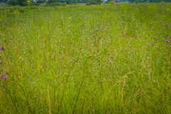 Rasen des grünen Grases lizenzfreie stockfotografie