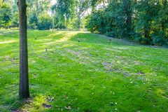 Rasen des grünen Grases mit Baumparklandschaft Lizenzfreie Stockfotos