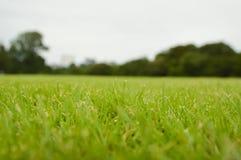 Rasen des grünen Grases mit flachem DOF am bewölkten Tag, Weichzeichnung Stockfotos