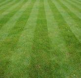 Rasen geschnitten mit Streifen Stockfoto