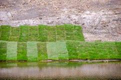 Rasen-Gras nahe Wasser lizenzfreie stockbilder