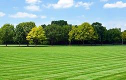 Rasen mit Baum-Zeile Stockfotografie