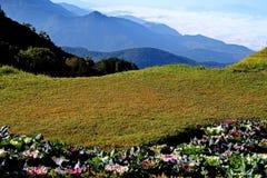 Rasen mit Blume auf Klippe Lizenzfreie Stockfotos