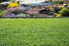 Rasen mit Blumen Stockfotos
