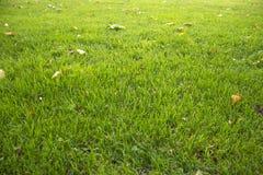 Rasen mit Herbstlaub Stockfotografie