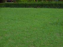 Rasen mit neuem Stockbilder