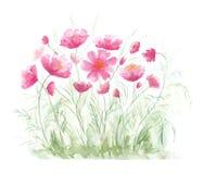 Rasen mit roten Mohnblumen Stockbild