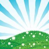 Rasen mit Sonnestrahlen stock abbildung