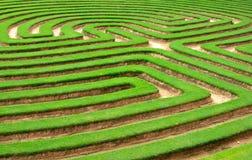 Rasen- oder Gras Gartenlabyrinth   Stockbilder