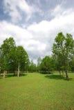 Rasen und Baum Lizenzfreies Stockfoto