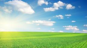 Rasen und bewölkter Himmel. stockbilder