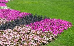 Rasen und Blumen Lizenzfreie Stockfotos