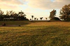 Rasen und Palmen Stockbilder