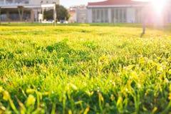 Rasen von Frühlingsblumen und -sonnenlicht Grüner Blumenhintergrund mit Bündel Gras Lizenzfreies Stockbild