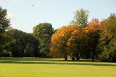 Rasenbäume und -tageslicht während des Falles Lizenzfreies Stockfoto