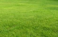 Rasenbereich Stockfotos