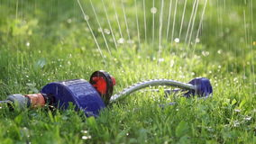 Rasenberieselungsanlage, die Wasser über grünem Gras kastriert stock footage