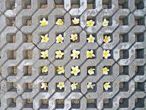 Rasenblock mit Plumeriablumen Lizenzfreie Stockfotografie