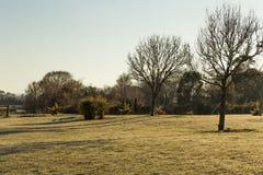 Rasenfeld mit trockenen Bäumen - Winter Australien lizenzfreie stockbilder