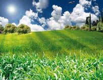 Rasenfläche Stockbild