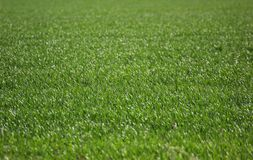 Rasenfläche Stockfotos