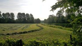 Rasenfläche in der Nähe ein Nebenfluss stockbilder