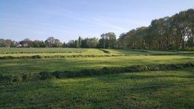 Rasenfläche in der Nähe ein Nebenfluss lizenzfreies stockfoto